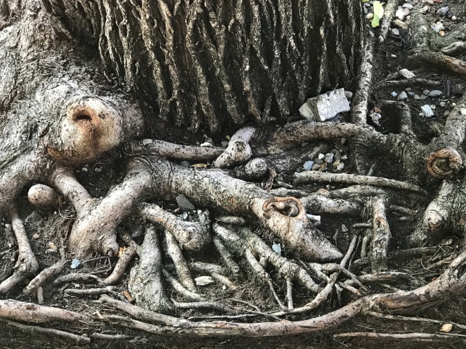 BLOG Photo -Tree roots