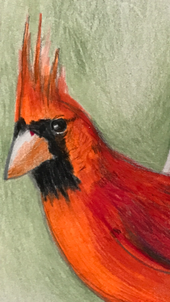 Suddenly Mad- The Cardinal Truth (Drawing detail face of the bird)