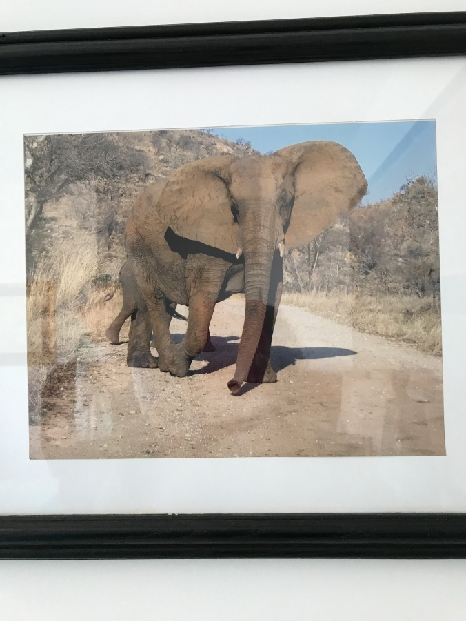 Suddenly Mad- Impermanence and Change (photo of mother elephant with baby - Dina's apartment)